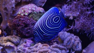אלמוג ודגים נדירים